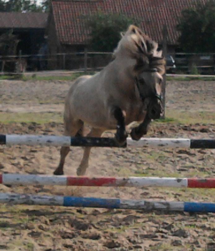 Verkocht Prachtige Paarden